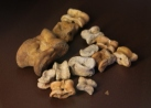Knucklebones from Thebes